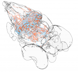 Brainrender collaboration  is out in eLife