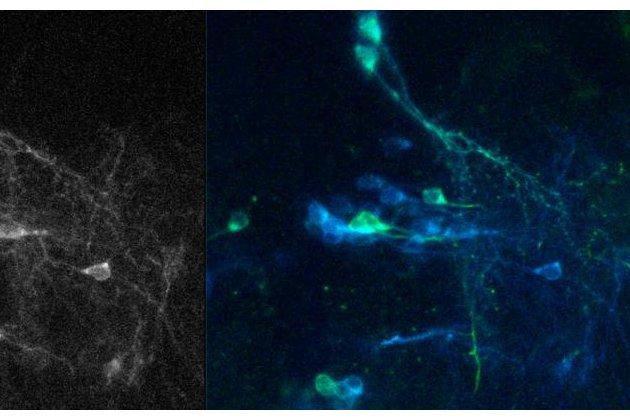 Calcium sensor collaboration published